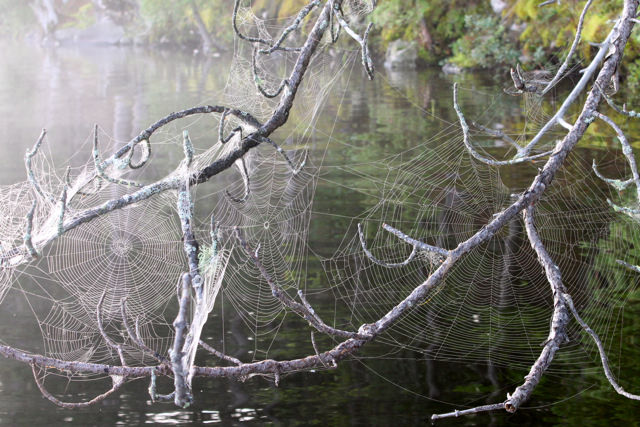 lake mist 3
