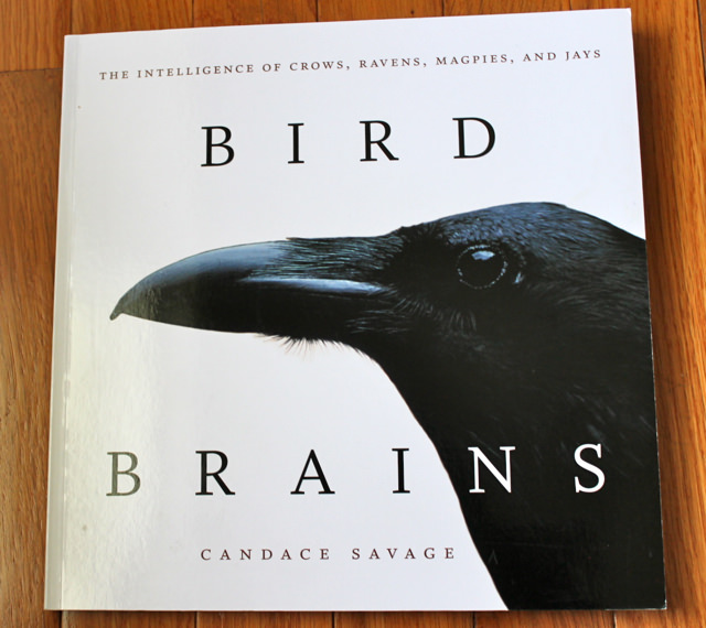 birdbrains book